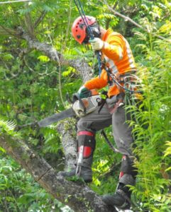 Scott Arborist 1