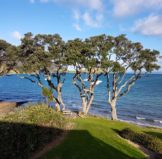Tree Pruning – Is Thinning or Topping Better?