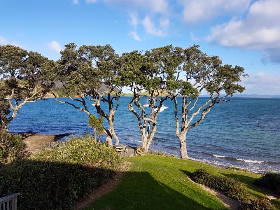 Tree Pruning Native Pohutukawa Trees