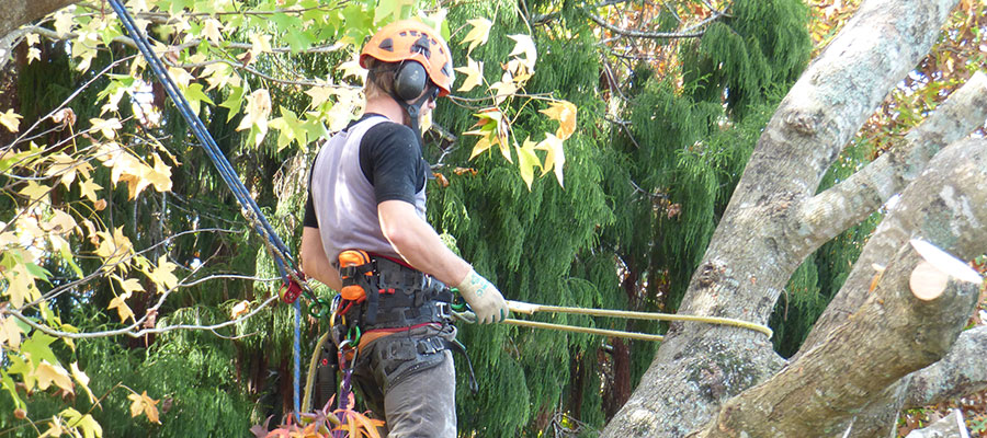 safe tree removal Northland