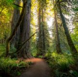 Forest Bathing for your health